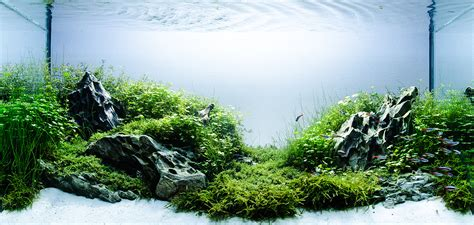 substrate aquascape aquascaping basics planted aquarium substrate