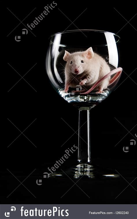 mouse for glass mouse in glass image