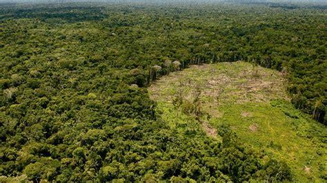 imagenes satelitales bosques deforestaci 243 n en ucayali larepublica pe