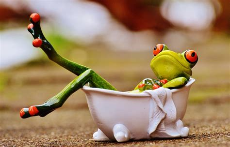free photo frog bath swim relaxation relax free
