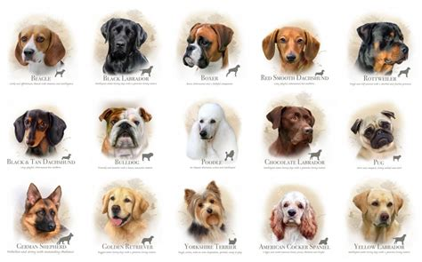 types of dogs different types dogs