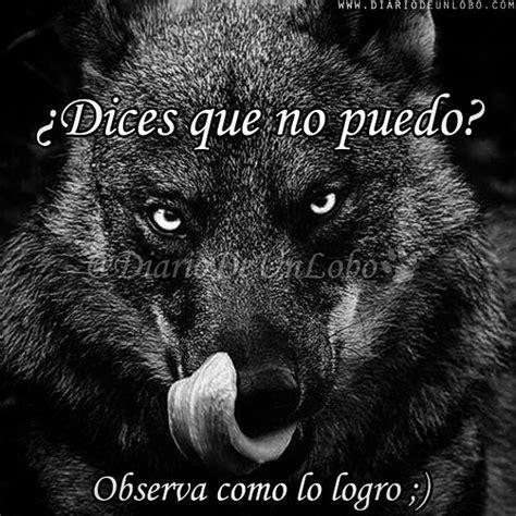 imagenes perronas de lobos diario de un lobo