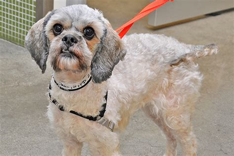 matted photos a haircut could save a life preventing your pet s coat