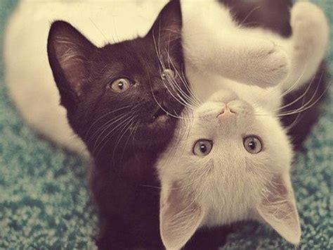 imagenes tumblr gatitos 191 conoces la edad exacta de tu gato 161 desc 250 brelo aqu 237