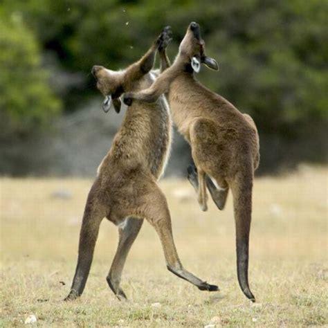 animals fighting animal fights 18 pics picture 11 izismile com