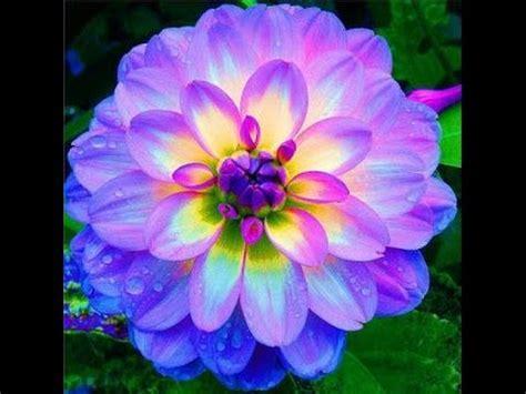 imagenes flores mas bonitas mundo top 10 flores m 225 s hermosas pero extra 241 as en el mundo