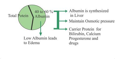 Vitamin Albumin albumin serum albumin labpedia net