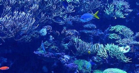 how to take fascinating underwater iphone photos coral reef pictures iphone 6 wallpaper 25137 underwater