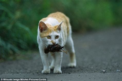 kills cat cats killing more than owners realise according to of