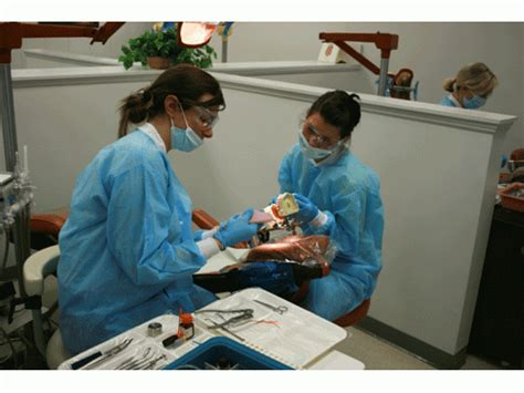 consider a career as a dental assistant waltham ma patch