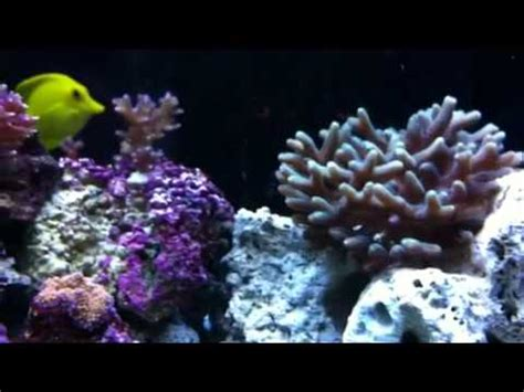 marine aquascaping techniques reef tank update aquascaping ideas vidoemo emotional