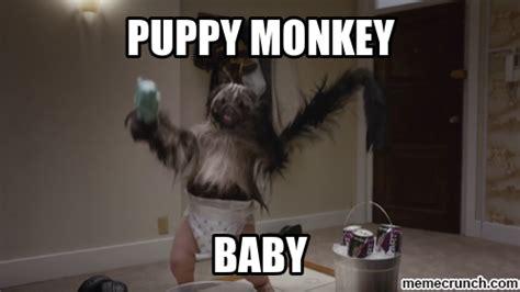 Baby Monkey Meme - puppymonkeybaby
