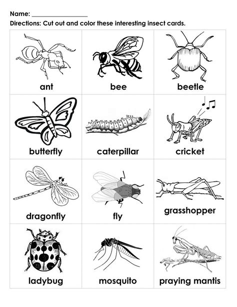 kids bug and insects worksheets bugs for kids to color interesting insects black