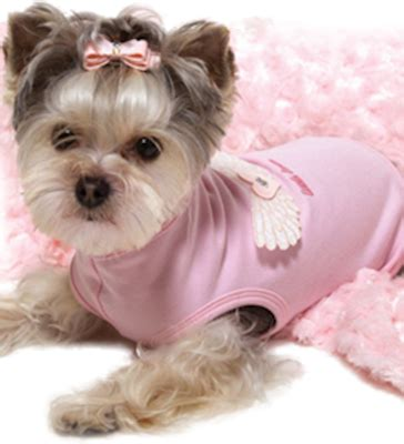 yorkies cheap pin affordable yorkie poo image search results on