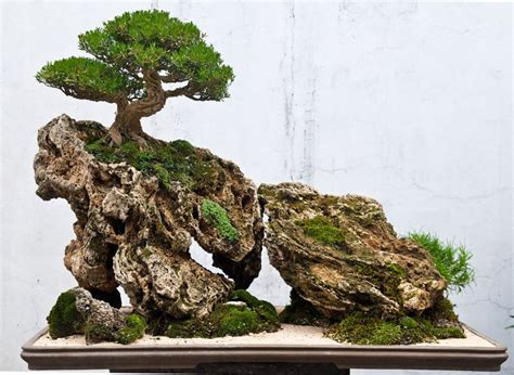 Bonsai Rock Garden Bonsai 187 Landscape Saikei And Penjing Landscapes And