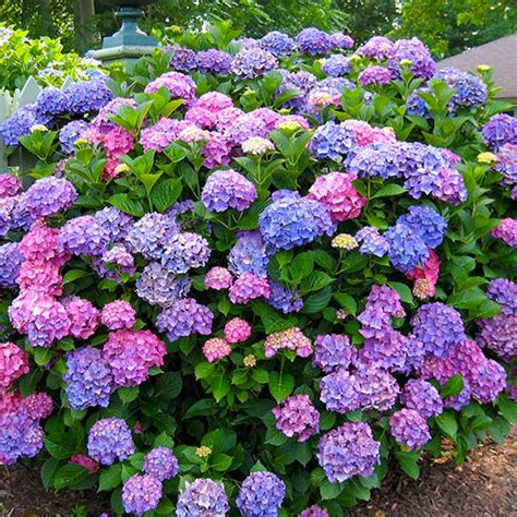Garden Flowering Shrubs Northeast Gardening What Shrubs Can Do For Your Garden