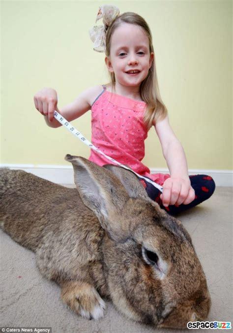 le hase record le plus gros lapin du monde p 232 se 22 kilos photos