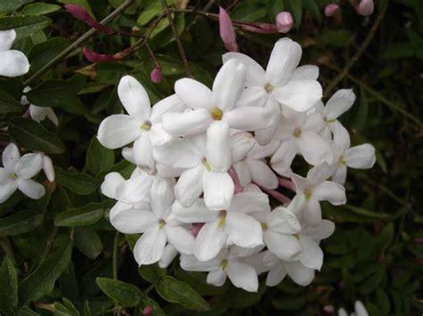 piccolo fiore accordi lavandallegra la quot profumoterapia quot parte 1 176 bis non