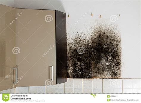 mold in drywall behind kitchen cabinets black mould stock photo image 65659573