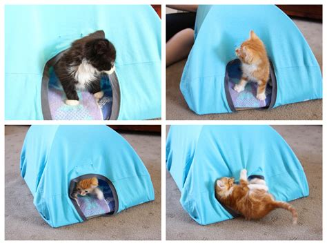 and easy diy cat tent with 3 things you at home