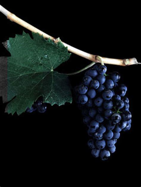 imagenes de uva malbec vinos argentinos malbec