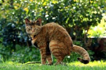 gegen katzenkot im garten 2720 katzenkot im garten was tun zuhause net