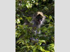 Netravali Wildlife Sanctuary in Goa, Netravali Sanctuary ... Guest Houses