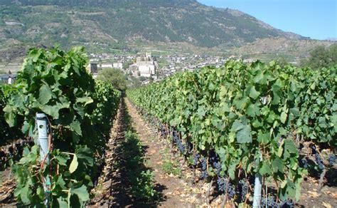 vini pavia didier gerbelle vendita vini enoteca pavia