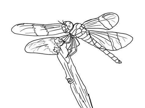 free dragonfly coloring page 18