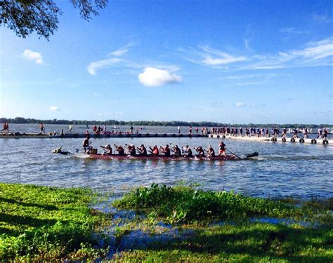 dragon boat racing florida lake mount dora buzz news for the active lifestyle in mount