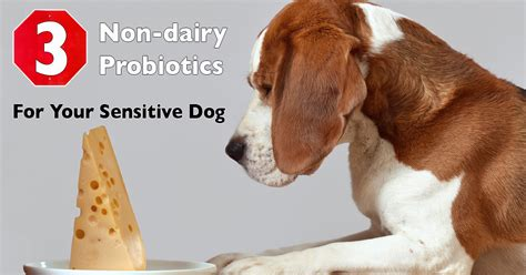 is dairy bad for dogs top 3 non dairy probiotics for your