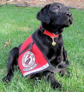 service puppy 5 questions to ask before partnering with a service the battle buddy foundation
