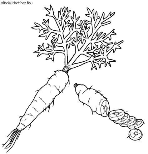 imagenes animadas de zanahorias para colorear dibujos de verduras y hortalizas