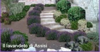 impressionante Idee Per Aiuole Da Giardino #1: image-progetto-online-bordura-lavanda.jpg