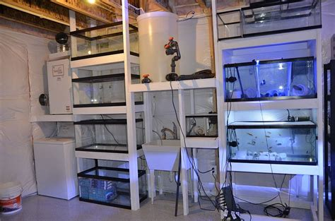 fish room water change system copps new beast reefs