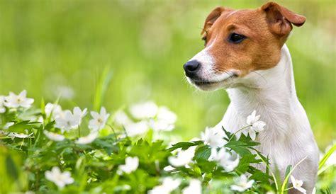 alimentazione vegetariana per cani alimentazione vegetale per cani possibile