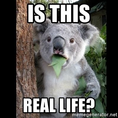 Is This Real Life Meme - is this real life koala can t believe it meme generator