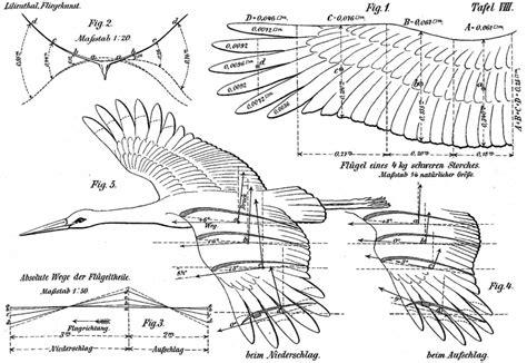 tim birkhead on ten thousand birds top 5 ornithology