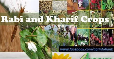 Agriculture Information Bank Rabi And Kharif Crops