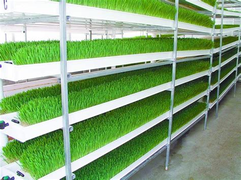 Innovative Home Design Inc by Beautiful Commercial Hydroponic Growing Systems 17 Best