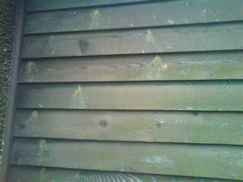 woodpecker damage to house siding siding repairs woodpecker damage siding repair