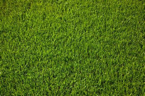 Der Perfekte Rasen by Perfekter Rasen