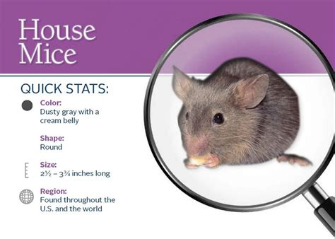 house rat pest control burnum hahn exterminators inc tuscaloosa al house mice