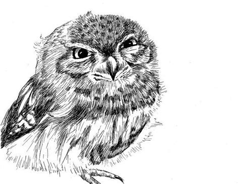 burrowing owl printable pictures tiny burrowing owl pen and ink print 5x7 owl print