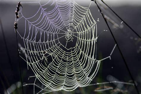 teia de aranha wikipedia  enciclopedia livre