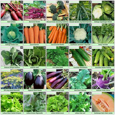Buy Heirloom Survival Seeds Vegetable Garden Seed
