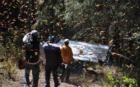 patterns in nature documentary imax goes from batman to butterflies in first trailer