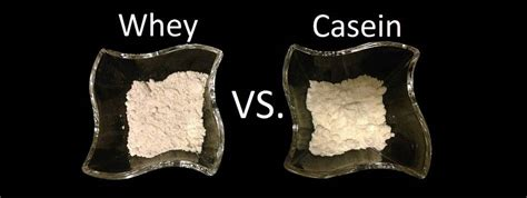 wann whey protein einnehmen whey oder casein protein welches wann egal moremuscles de