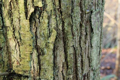 how to paint tree bark texture textures a textile student s diary