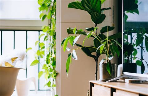Plants That Detox The Air by These Are The Plants That Purify The Air Well